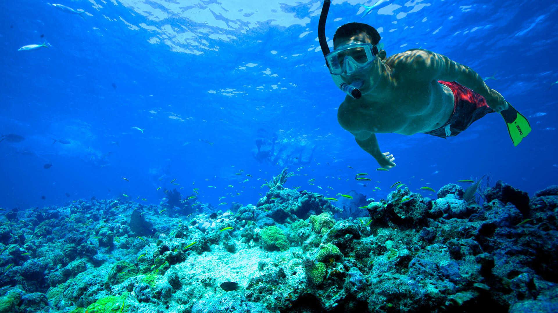 http://louladakis-apts.gr/wp-content/uploads/2016/05/louladakis_activities_snorkeling.jpg